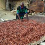 Nigeria cocoa output to fall in 2020/21 on virus, dry weather -cocoa association
