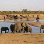 African elephants face extinction - Red List
