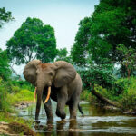 New decisions by global conservation group bolster efforts to save Africa's elephants