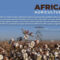 Malawi expects bountiful GM cotton crop as the African Union hones GM policies