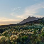 Cape Town's climate strategy isn't perfect, but every African city should have one