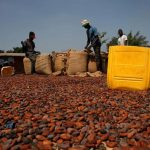 Cocoa producers Ivory Coast, Ghana, others should join forces to control supplies