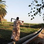 Egypt's farmers tap new technology to save water and boost crops