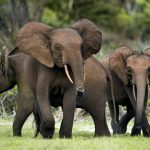 Human-wildlife conflicts surge in Namibia