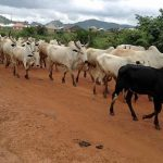 Nigeria school abductions sparked by cattle feuds, not extremism, officials say