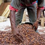 Regulations needed to stem cocoa sector abuses - report