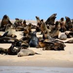 Namibia 'on the brink of catastrophe' after thousands of dead seal pups wash ashore