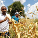 Kenyan insurer Pula offers lifeline to African farmers hit by climate change