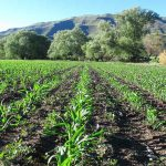 How sub-Saharan Africa can rethink its approach to agriculture