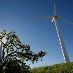 Africa urged to embrace wind power to create jobs and go green