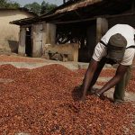 Ghana, Ivory Coast threaten to suspend cocoa companies' sustainability schemes