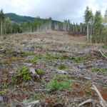 From beef to chocolate, illegal deforestation found behind many everyday foods